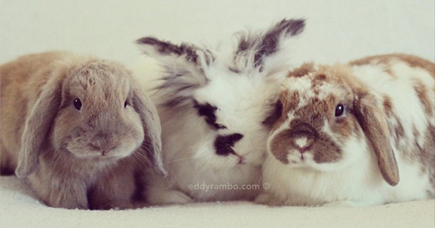 29 Photos Of Four Mind-Numbingly Adorable Bunnies All From One Instagram Account